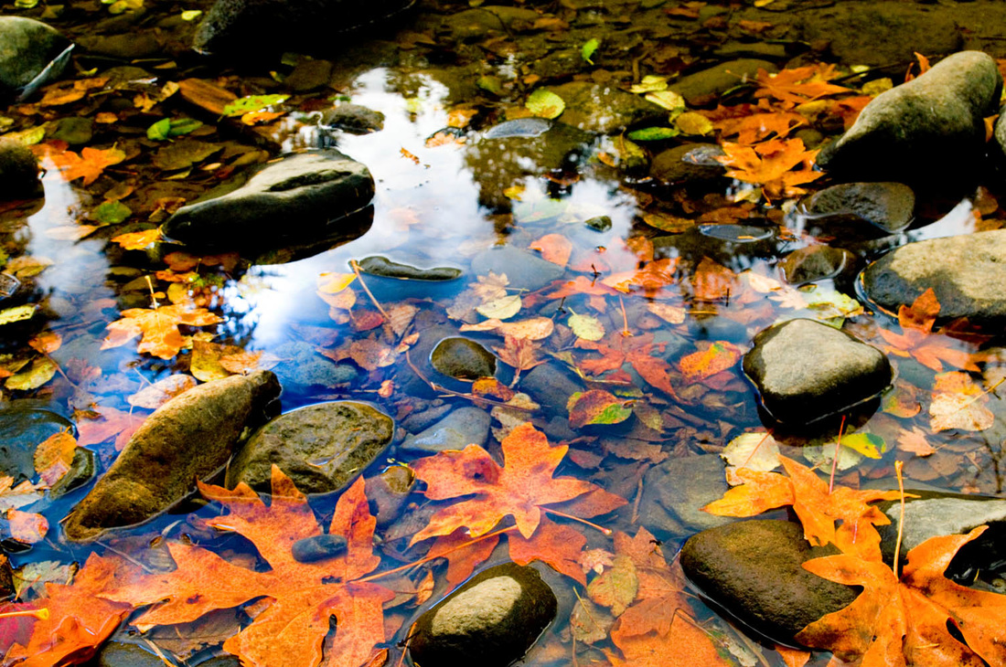 fallen leaves in the river