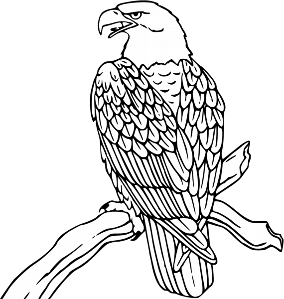 Line Drawing of Bald Eagle