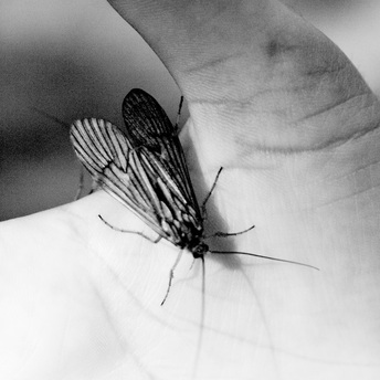 winged insect in hand