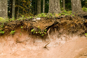 soil profile with roots